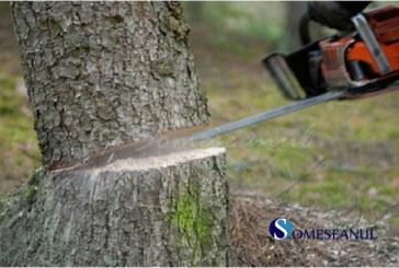 Doi săteni din Geaca, cercetați pentru furt de arbori