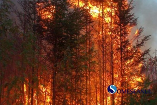 Atenționare de călătorie Italia – Incendii de pădure în zona de centru și sud