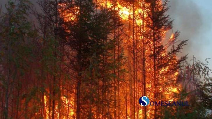 incendiu_padure_foc
