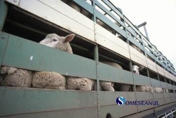 Acțiune la nivel național și verificări ale transporturilor de animale