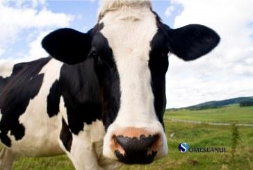 Au fost solicitati pentru a salva… o vaca