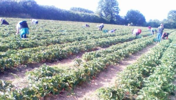 locuri de munca muncitori agricultura