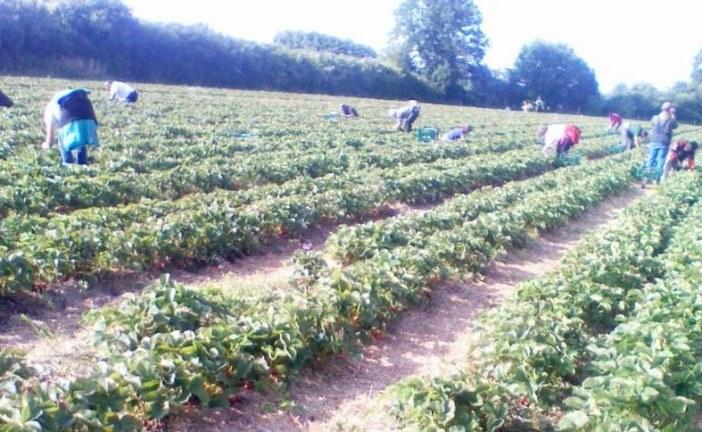 Sprijin financiar din partea Guvernului pentru agricultorii din sectorul vegetal
