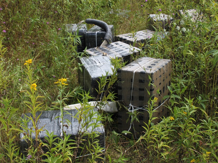 tigari contrabanda ucraina