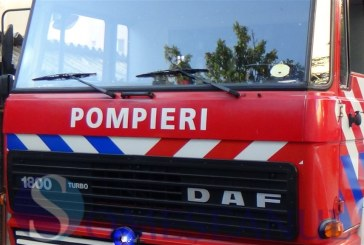 Cățel salvat din Valea Zalăului de pompieri. Aceștia au intervenit și la două incendii