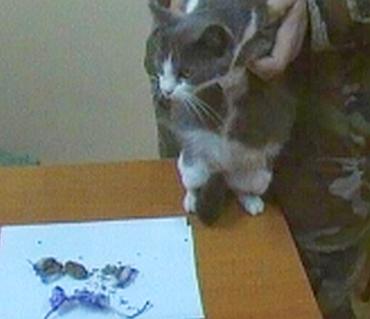 pisica droguri inchisoare