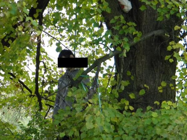 spanzurat copac