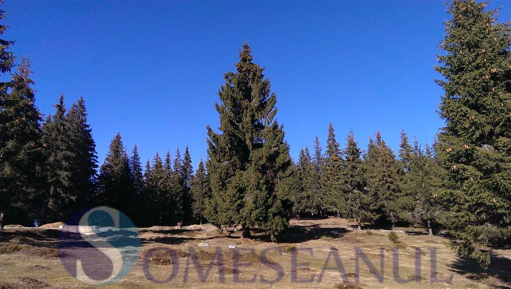someseanul-IMAG0160