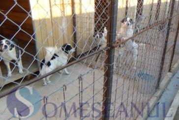 Primarul Costan Morar răspunde acuzațiilor Anima Pro Terra referitor la maltratarea câinilor din adăpost