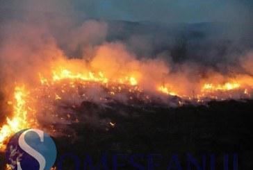 Incendiu de vegetație la ieșire din Gherla – VIDEO