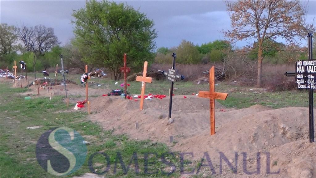 Mormintele din cimitirul Dealul Florilor Dej vandalizate de o turma de oi (3)