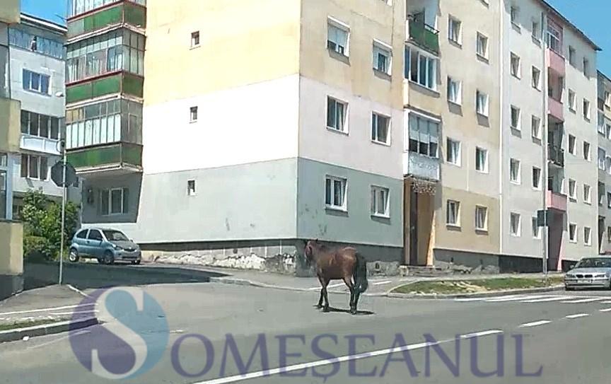 someseanul-cal scapat liber pe strazile din Dej
