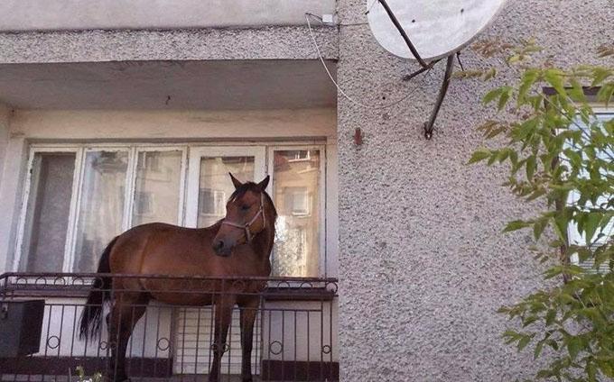 cal-pe-balcon