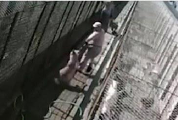 Brutalitate față de animale la Dej. Câinii din adăpost sunt maltratați de îngrijitori – VIDEO