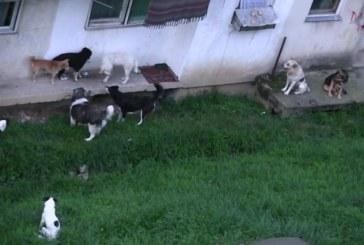 Noapte albă pentru locuitorii din Dej din cauza haitelor de câini – VIDEO