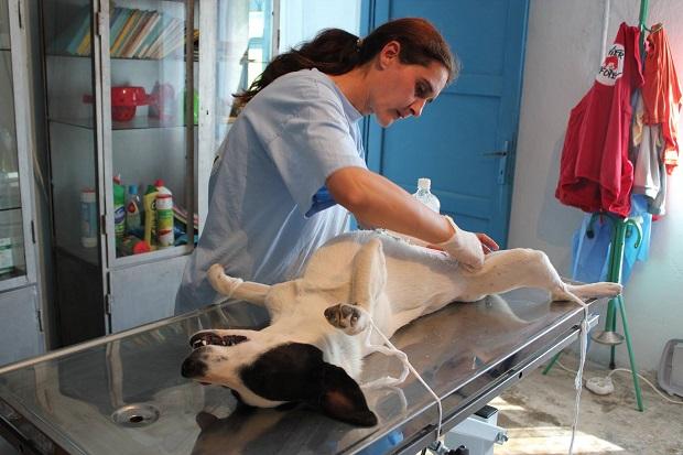 sterilizare caini