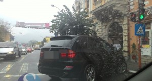 parcat ca un bou Dej (1)