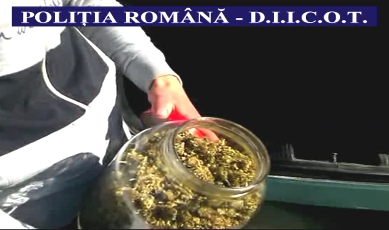 trafic droguri cannabis