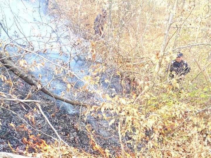 incendiu vegetatie feldru