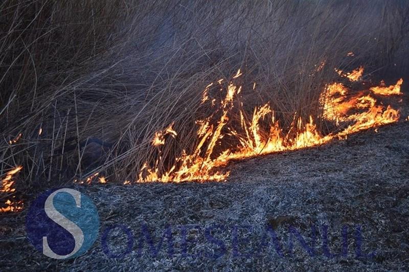 incendiu vegetatie livada