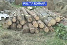 Peste 90 mc de material lemnos, confiscat de polițiștii din cadrul Biroului Județean de Poliție Transporturi