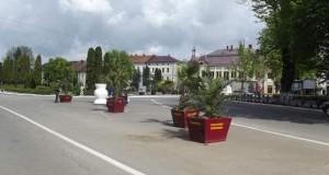 palmieri nasaud