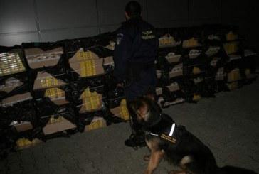 Peste 20.000 pachete cu țigări confiscate la frontiera de nord – VIDEO