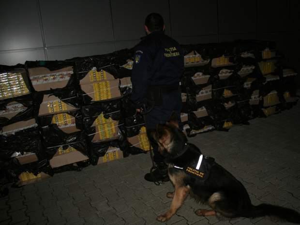 caine politia de frontiera contrabanda tigari
