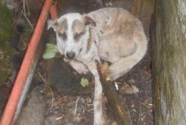 Act criminal într-un sat de lângă Gherla: Un monstru de om a încercat să ucidă un câine cu furca. A fost oprit de polițiști – VIDEO