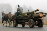 Patru bărbați din Cășeiu, prinși transportând lemne fără acte. Au rămas și fără lemne și fără căruțe