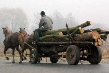 Tânăr din Aluniș cercetat pentru furt de lemne