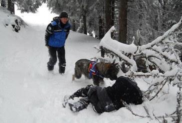 Câinii salvatori – ajutor de nădejde al jandarmilor montani  în salvarea vieților oamenilor – FOTO