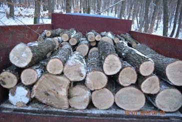 Acţiuni pentru prevenirea şi combaterea tăierilor ilegale de arbori, desfăşurate de poliţişti