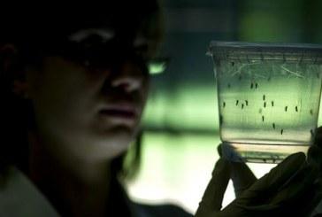 Alarmă: Primul caz de infectare cu virusul Zika, confirmat în România