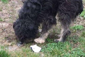 Se întâmplă la Dej: câine salvat din chinuri groaznice. Avea burta tăiată de o sârmă – FOTO
