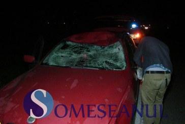 Accident rutier la Fundătura. BMW distrus de un animal – FOTO/VIDEO