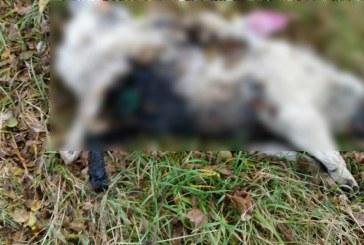 Câine incendiat pe digul Someșului, la Dej. Atenție, imagini șocante!