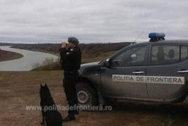 VIDEO – Câine polițist, ucis în timpul serviciului de un contrabandist