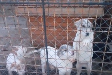 Câinii din Centrul de ecarisaj Cluj-Napoca, riscă să moară de frig din cauza gerului