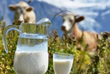 Crescătorii de vaci de lapte vor primi un sprijin financiar excepțional în valoare totală de 11 milioane euro