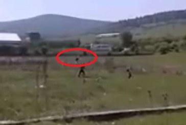 Imagini îngrozitoare. Doi țigani filmați în timp ce aruncau într-o baltă doi cățeluși – VIDEO