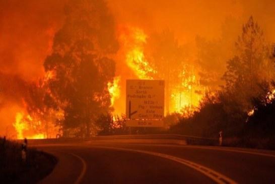Cel puţin 62 de persoane au murit în urma unui devastator incendiu de pădure în Portugalia – VIDEO