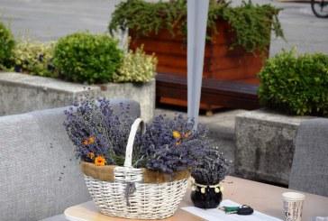 Grădini posibile, artă urbană și terapii verzi la Baia Mare