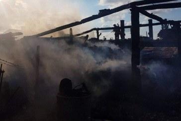 O țigară aruncată la întâmplare a pornit incendiul. Zece cai au fost salvați din calea flăcărilor