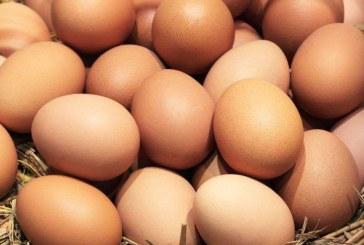 Scandalul ouălor contaminate cu insecticid s-a extins în 17 state europene