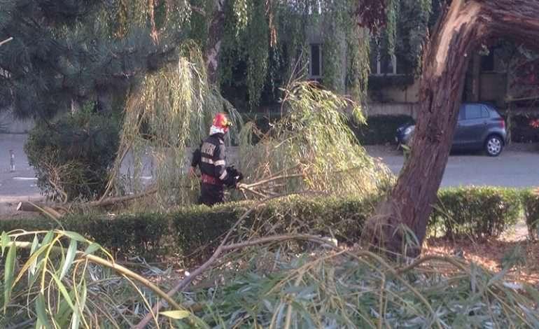 copac cazut parc