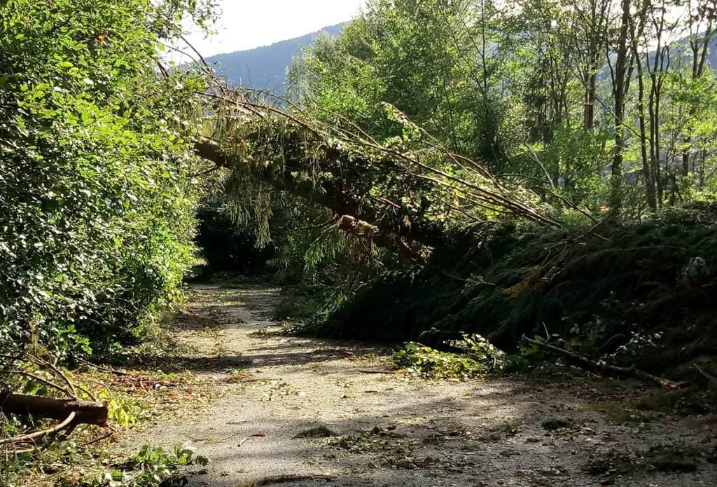 drum blocat copac cazut