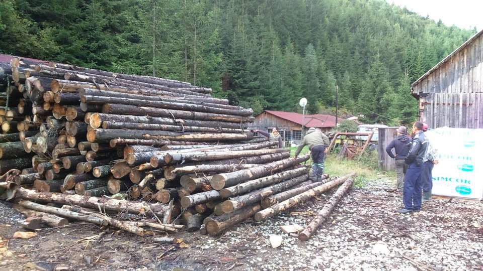 perchezitii mafia lemnului maramures