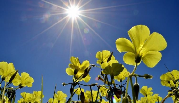 soare-primavara-meteo-cald-flori