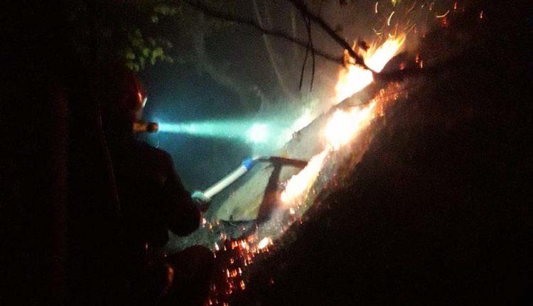 incendiu padure cosbuc